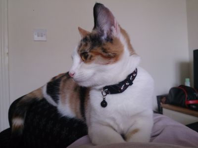Zoe with collar