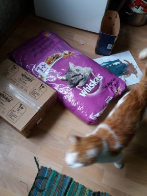 Whiskas products and happy cat Cheddar