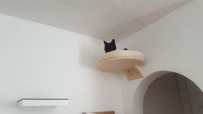 Natural Paradise Wall Mounted Cat Bed