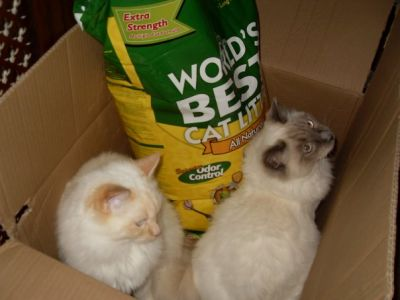 Raffy and Lui love' World's Best Cat litter'