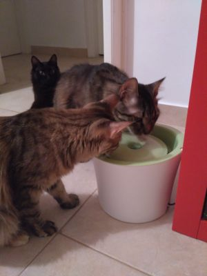 Luna and Hermes drinking water together