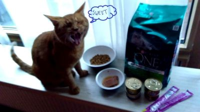 My Boy is very Happy with Purina