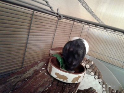 Trixie ceramic bowl for hamsters