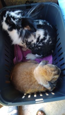 Great rabbit carrier