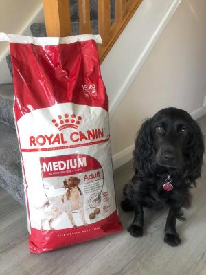 Royal Canin Med Adult