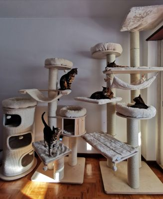 Excellent Strong Built Cat Tree Mansion