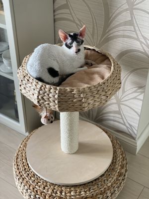 Natural Home I Cat Tree