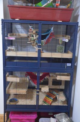 Chins new cage