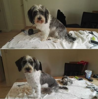 Molly before and after moser rex