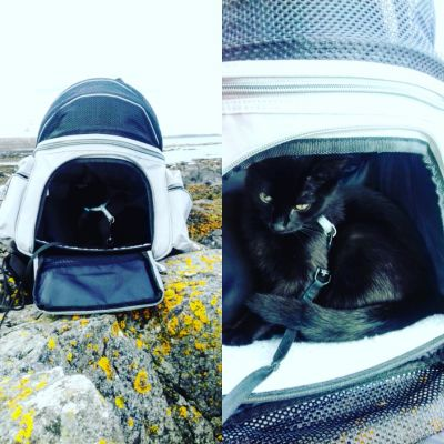 Sightseer cat backpack