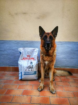 Royal Canin e Riss