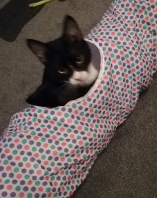 Max loving his dottie tunnel