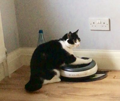 Fat cats and a great water bowl