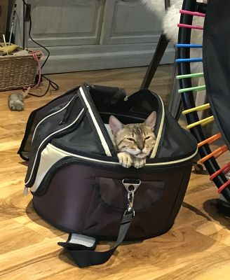 Bengal Willow loves the carrier