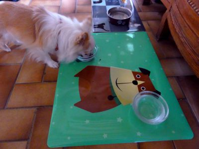 Gizmo et son set de table