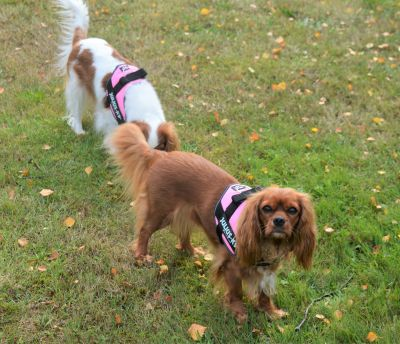 Love our new harnesses