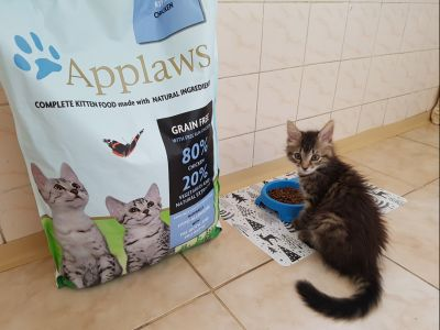 Applaws Kitten