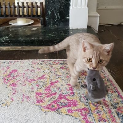 Remy loves his valerian mouse