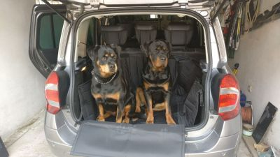 2 rotties going for a trip