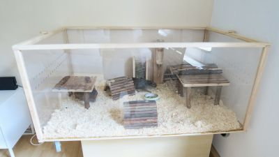 Living World Green Eco Habitat with guinea pigs