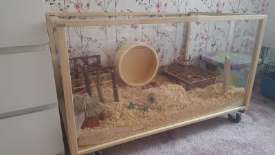 lovely large home for my Syrian hamster