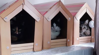 In the cat house