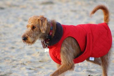 Jack in his red coat