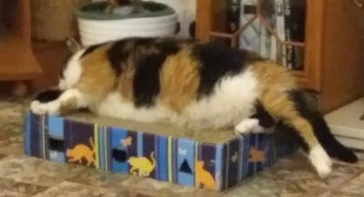 Purdy wishes they made bigger scratch boxes