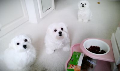 Dear Mummy We are waiting for your favourite Snack