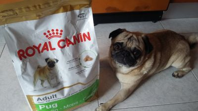 MAX-  EL GUARDIAN DE ROYAL CANIN