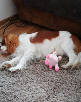 Harry fell asleep after playing his own Peppa