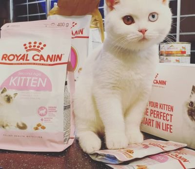 Royal Canin met Mystic