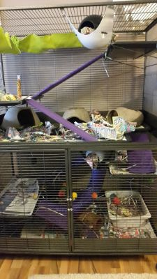 Our rat cage