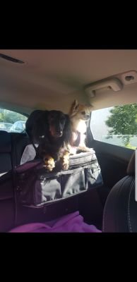 Doggie car seat