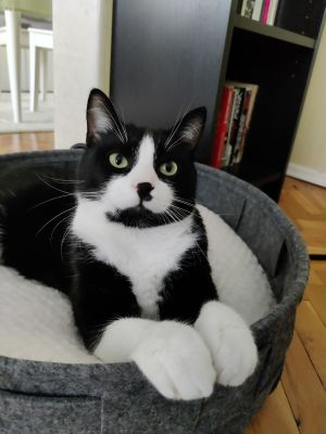 Oreo in his bed